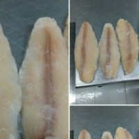 jual Dori / fillet patin