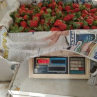 jual Strawberry fres and Frozen