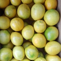 jual Lemon Fresh