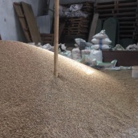 jual Jual Kopi Robusta (Green Bean) Grade AB, Siap supply kontinue