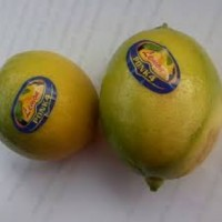 kerjasama Fresh Lemon