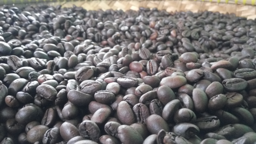 jualKopi Robusta (Roast Bean)