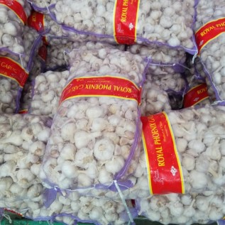 jualBAWANG PUTIH KATING IMPORT
