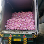 bawang putih import china